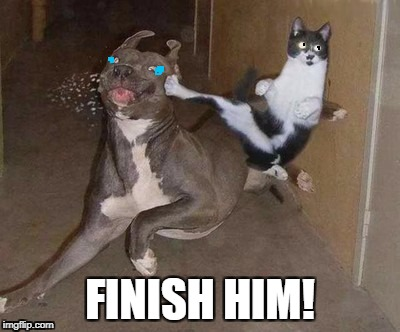 ;-; | FINISH HIM! | image tagged in - | made w/ Imgflip meme maker