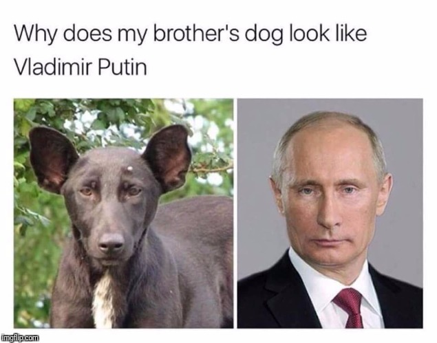 Woo, woo, wow-wooza!!! | Why does my brother's dog look like Vladimir Putin | image tagged in vladimir putin,dog,funny memes,memes,funny meme,meme | made w/ Imgflip meme maker