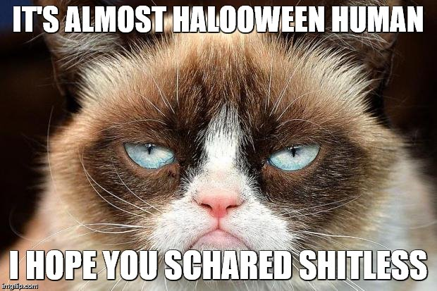 Grumpy Cat Not Amused Meme | IT'S ALMOST HALOOWEEN HUMAN I HOPE YOU SCHARED SHITLESS | image tagged in memes,grumpy cat not amused,grumpy cat | made w/ Imgflip meme maker