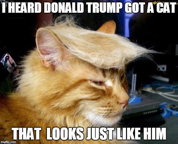donald trump cat |  I HEARD DONALD TRUMP GOT A CAT; THAT  LOOKS JUST LIKE HIM | image tagged in donald trump cat | made w/ Imgflip meme maker