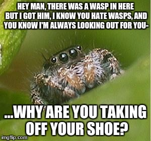 Misunderstood Spider | HEY MAN, THERE WAS A WASP IN HERE BUT I GOT HIM, I KNOW YOU HATE WASPS, AND YOU KNOW I'M ALWAYS LOOKING OUT FOR YOU- ...WHY ARE YOU TAKING O | image tagged in misunderstood spider | made w/ Imgflip meme maker