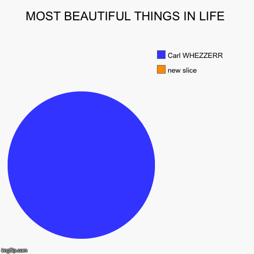 MOST BEAUTIFUL THINGS IN LIFE |, Carl WHEZZERR | image tagged in funny,pie charts | made w/ Imgflip pie chart maker
