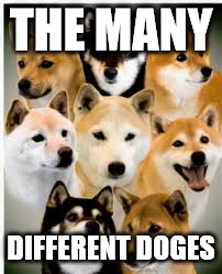 The different doges. | THE MANY DIFFERENT DOGES | image tagged in doge,shiba inu | made w/ Imgflip meme maker