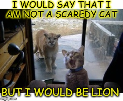 ok fine i'm just a little pussy  | I WOULD SAY THAT I AM NOT A SCAREDY CAT BUT I WOULD BE LION | image tagged in puns,scared cat,memes,funny,cats,pussy | made w/ Imgflip meme maker