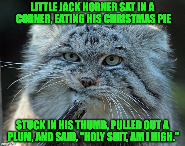 "George Carlin's Nursery Rhymes | LITTLE JACK HORNER SAT IN A CORNER, EATING HIS CHRISTMAS PIE STUCK IN HIS THUMB, PULLED OUT A PLUM, AND SAID, ""HOLY SHIT, AM I HIGH."" 