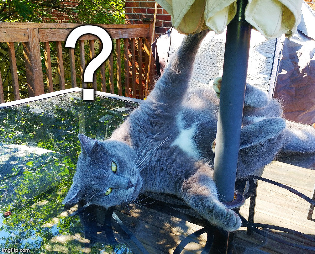 Pole dancing cat | ? | image tagged in pole dancing cat | made w/ Imgflip meme maker