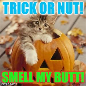 Halloween Cat | TRICK OR NUT! SMELL MY BUTT! | image tagged in halloween cat | made w/ Imgflip meme maker