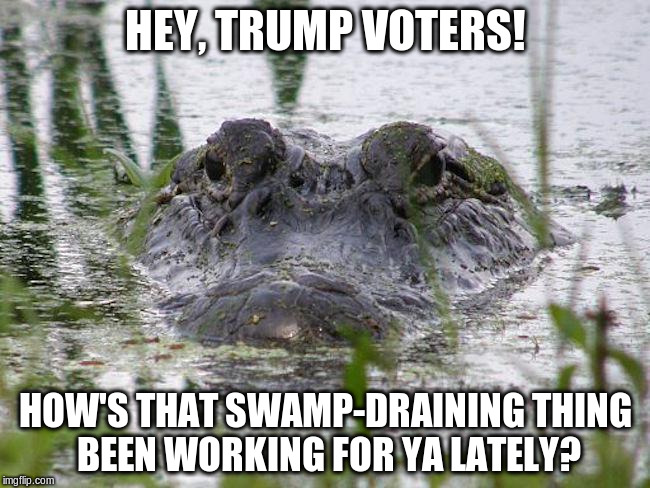 HEY, TRUMP VOTERS! HOW'S THAT SWAMP-DRAINING THING BEEN WORKING FOR YA LATELY? | image tagged in alligator in swamp linda macphee | made w/ Imgflip meme maker