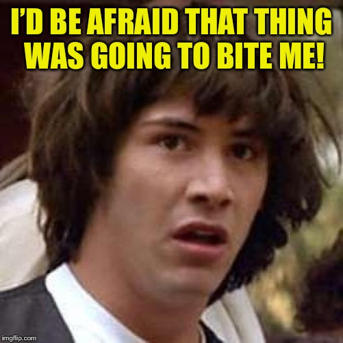 Conspiracy Keanu Meme | I'D BE AFRAID THAT THING WAS GOING TO BITE ME! | image tagged in memes,conspiracy keanu | made w/ Imgflip meme maker