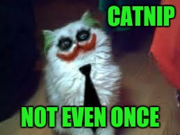Don't let your cats do drugs  | CATNIP NOT EVEN ONCE | image tagged in joker cat,memes,funny,catnip | made w/ Imgflip meme maker