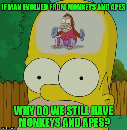 Homer Monkey | IF MAN EVOLVED FROM MONKEYS AND APES WHY DO WE STILL HAVE MONKEYS AND APES? | image tagged in homer monkey,apes,memes,evolution,monkeys,why | made w/ Imgflip meme maker