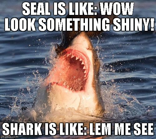 Travelonshark Meme | SEAL IS LIKE: WOW LOOK SOMETHING SHINY! SHARK IS LIKE: LEM ME SEE | image tagged in memes,travelonshark | made w/ Imgflip meme maker