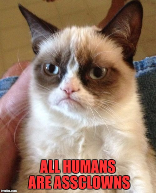 Grumpy Cat Meme | ALL HUMANS ARE ASSCLOWNS | image tagged in memes,grumpy cat | made w/ Imgflip meme maker