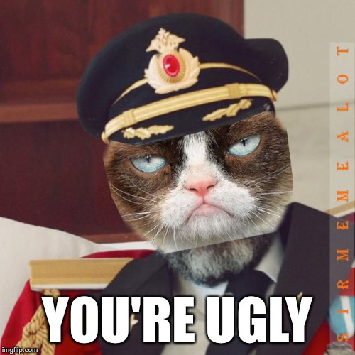 Cat-Pain Obvious | YOU'RE UGLY | image tagged in cat-pain obvious,memes,captain obvious,grumpy cat | made w/ Imgflip meme maker