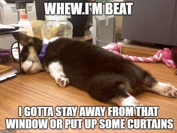 Doggie In The Window  | WHEW.I'M BEAT I GOTTA STAY AWAY FROM THAT WINDOW OR PUT UP SOME CURTAINS | image tagged in dog humor,dog tired | made w/ Imgflip meme maker