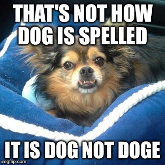 THAT'S NOT HOW DOG IS SPELLED IT IS DOG NOT DOGE | image tagged in troll dog | made w/ Imgflip meme maker