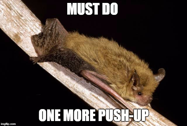 MUST DO ONE MORE PUSH-UP | image tagged in bat struggling,funny,exercise | made w/ Imgflip meme maker