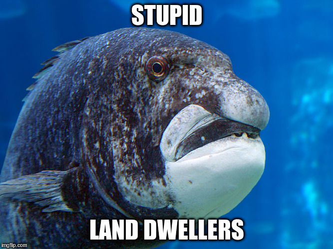 STUPID LAND DWELLERS | made w/ Imgflip meme maker