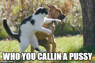 Pussy With Punch | WHO YOU CALLIN A PUSSY | image tagged in cat fight | made w/ Imgflip meme maker