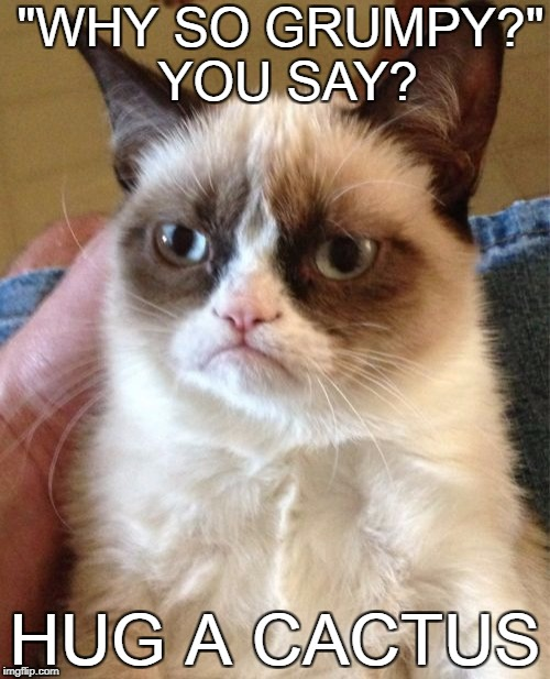 "Grumpy Cat Meme | ""WHY SO GRUMPY?"" YOU SAY? HUG A CACTUS 