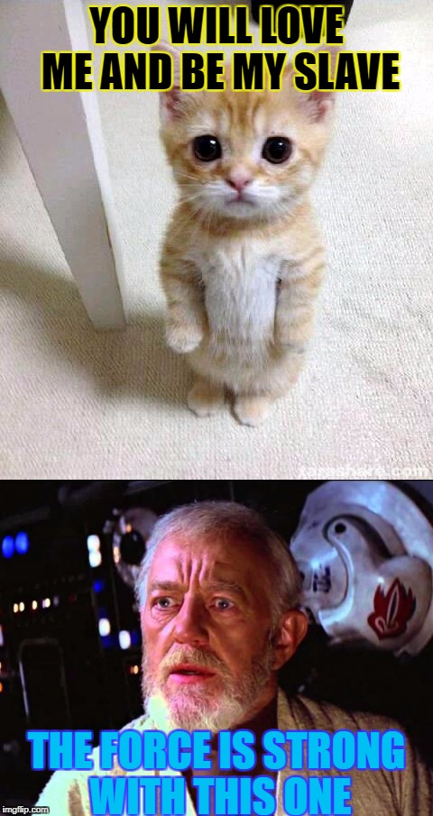 YOU WILL LOVE ME AND BE MY SLAVE THE FORCE IS STRONG WITH THIS ONE | image tagged in cute cat | made w/ Imgflip meme maker