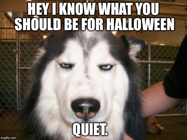 Annoyed Dog | HEY I KNOW WHAT YOU SHOULD BE FOR HALLOWEEN QUIET. | image tagged in annoyed dog | made w/ Imgflip meme maker