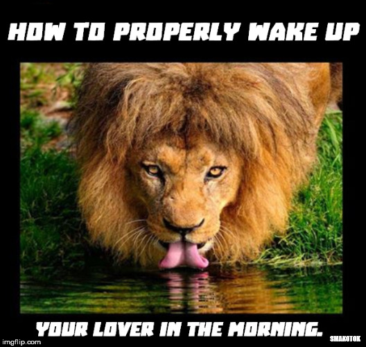 Each morning | SMAKOTOK | image tagged in funny memes,memes,lion,wake up | made w/ Imgflip meme maker