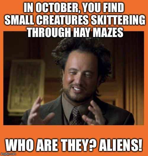 IN OCTOBER, YOU FIND SMALL CREATURES SKITTERING THROUGH HAY MAZES WHO ARE THEY? ALIENS! | image tagged in halloween aliens | made w/ Imgflip meme maker