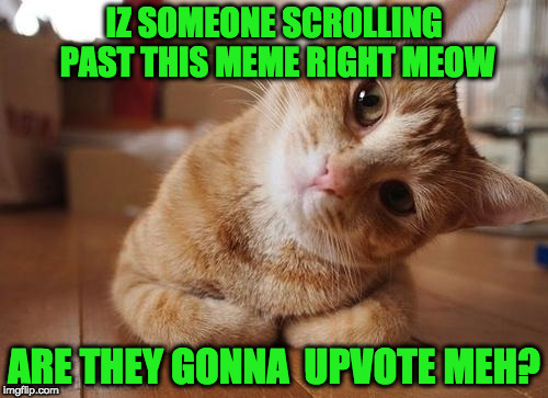 Curious Question Cat | IZ SOMEONE SCROLLING PAST THIS MEME RIGHT MEOW ARE THEY GONNA  UPVOTE MEH? | image tagged in curious question cat | made w/ Imgflip meme maker