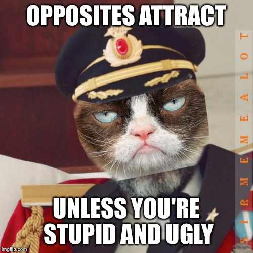 Cat-Pain Obvious | OPPOSITES ATTRACT UNLESS YOU'RE STUPID AND UGLY | image tagged in cat-pain obvious,memes,captain obvious,grumpy cat | made w/ Imgflip meme maker