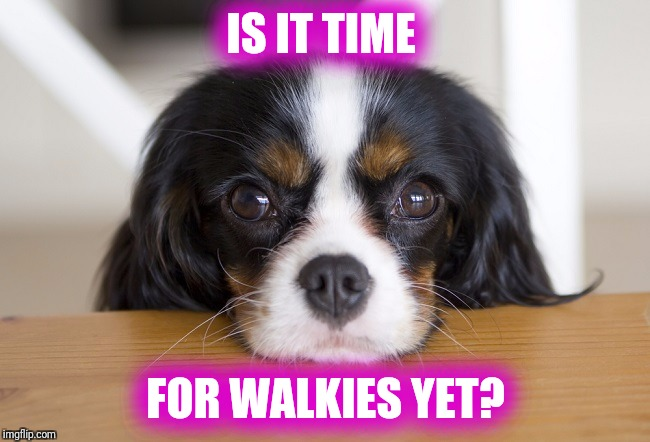 IS IT TIME FOR WALKIES YET? | image tagged in walkies | made w/ Imgflip meme maker