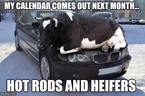 My calendar...  | MY CALENDAR COMES OUT NEXT MONTH... HOT RODS AND HEIFERS | image tagged in cows | made w/ Imgflip meme maker