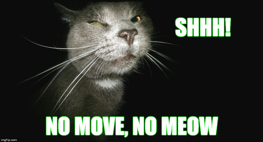 Stalker Cat | SHHH! NO MOVE, NO MEOW | image tagged in stalker cat | made w/ Imgflip meme maker