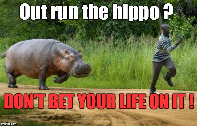 "PSA: They don't call 'em ""River Horses"" for nothing. 