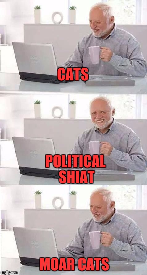 On second thought Harold | CATS MOAR CATS POLITICAL SHIAT | image tagged in on second thought harold | made w/ Imgflip meme maker