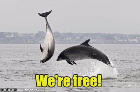 We're free! | made w/ Imgflip meme maker