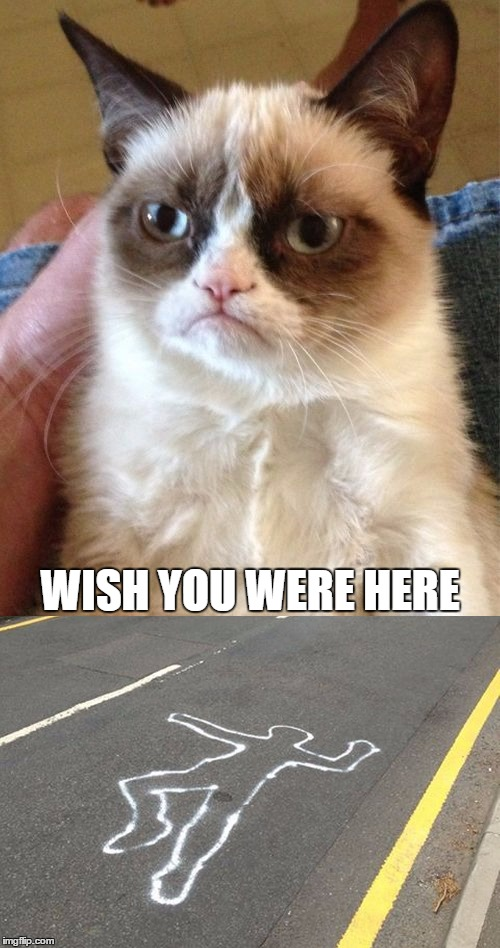 And the stakes get a little higher. | WISH YOU WERE HERE | image tagged in grumpy cat | made w/ Imgflip meme maker