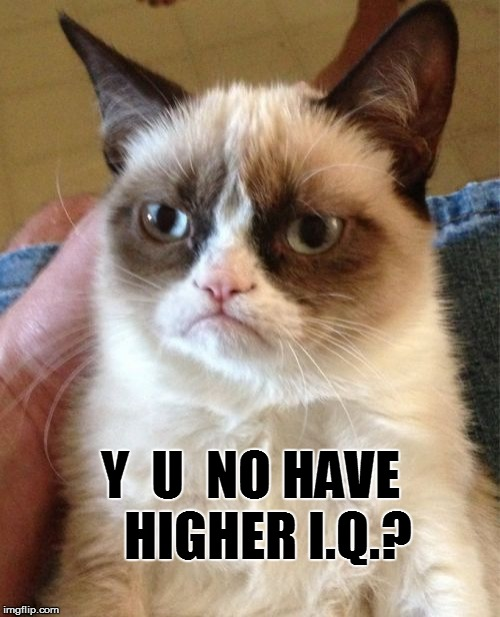 Grumpy Cat Meme | Y  U  NO HAVE   HIGHER I.Q.? | image tagged in memes,grumpy cat | made w/ Imgflip meme maker