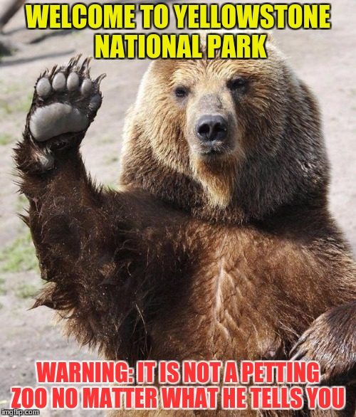 go ahead and see what happens | WELCOME TO YELLOWSTONE NATIONAL PARK WARNING: IT IS NOT A PETTING ZOO NO MATTER WHAT HE TELLS YOU | image tagged in hello bear,funny memes | made w/ Imgflip meme maker