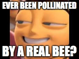 pollination | EVER BEEN POLLINATED BY A REAL BEE? | image tagged in bee movie | made w/ Imgflip meme maker