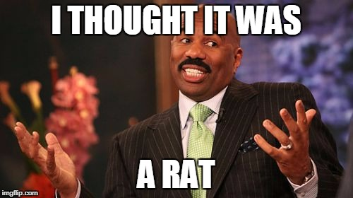 Steve Harvey Meme | I THOUGHT IT WAS A RAT | image tagged in memes,steve harvey | made w/ Imgflip meme maker