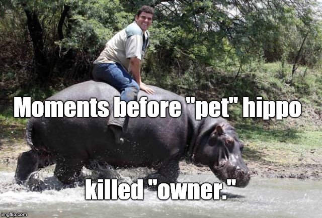 "Moments before ""pet"" hippo killed ""owner."" 