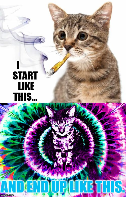 Art Week a JBmemegeek & Sir_Unknown event | I        START     LIKE    THIS... AND END UP LIKE THIS. | image tagged in memes,art week,cat,smoking weed,getting high | made w/ Imgflip meme maker