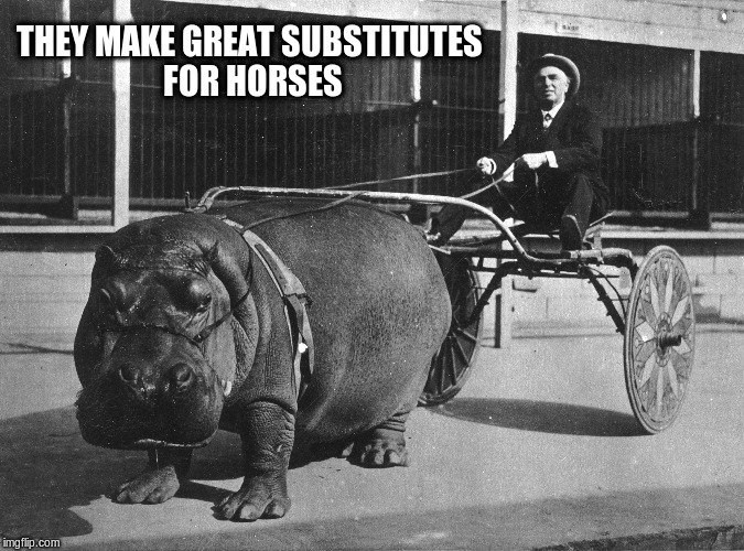 THEY MAKE GREAT SUBSTITUTES FOR HORSES | made w/ Imgflip meme maker