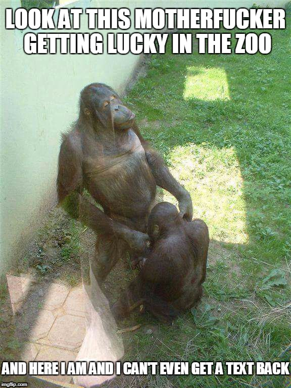 Lucky In The Zoo | LOOK AT THIS MOTHERF**KER GETTING LUCKY IN THE ZOO AND HERE I AM AND I CAN'T EVEN GET A TEXT BACK | image tagged in lucky,zoo,monkeys | made w/ Imgflip meme maker
