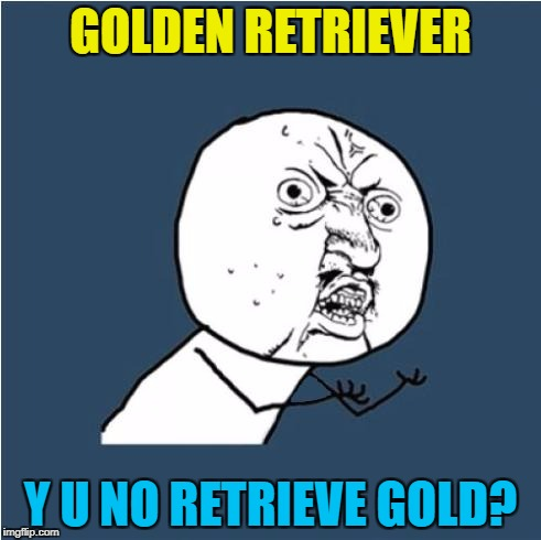 Sticks? Yes. Balls? Yes. Gold? No :) |  GOLDEN RETRIEVER; Y U NO RETRIEVE GOLD? | image tagged in y u no,memes,golden retriever,dogs,animals,gold | made w/ Imgflip meme maker