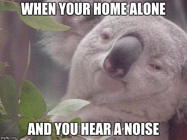 Dank Koala | WHEN YOUR HOME ALONE AND YOU HEAR A NOISE | image tagged in dank koala | made w/ Imgflip meme maker