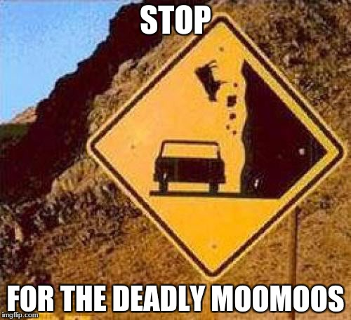 Falling Cows | STOP FOR THE DEADLY MOOMOOS | image tagged in falling cows | made w/ Imgflip meme maker