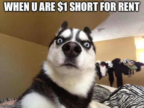 Rent | WHEN U ARE $1 SHORT FOR RENT | image tagged in husky richard,memes,rent | made w/ Imgflip meme maker