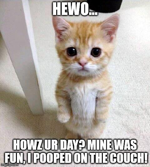 Cat Meme Bitcoin